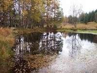 Fassfern Forest walks
