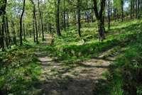 Strone woods, Glen Lochy