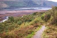Glasdrum Wood, Loch Creran